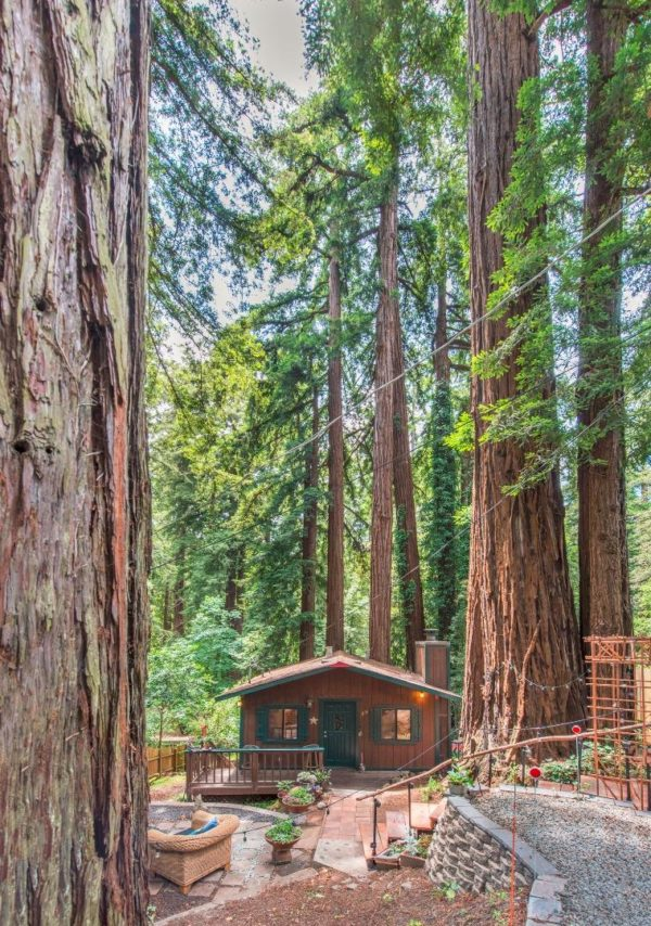 Tiny Cabin Surrounded By Giant Redwood Trees