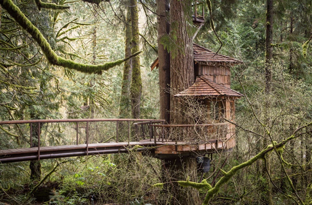 Conservative treehouse