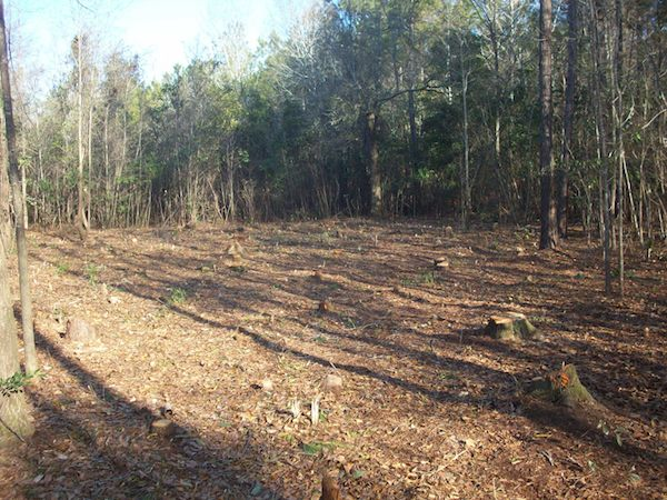 clearing land for tiny house on a trailer   Young Family Adopts Simple, Tiny House Living Lifestyle