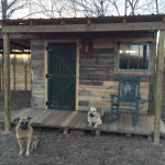 Dogs Hanging out at the Pallet Cabin