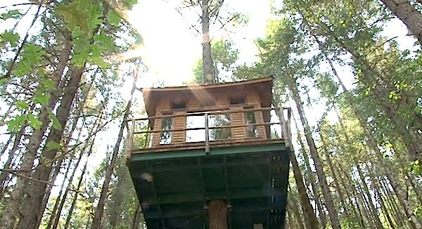 treehouse-resort-3
