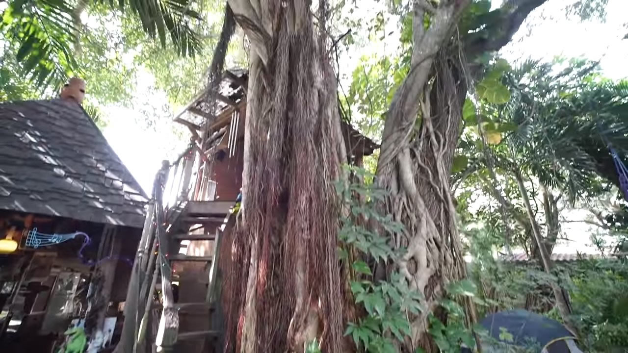 Woman Who Raised 3 Children In Her Diy Tree House In Miami