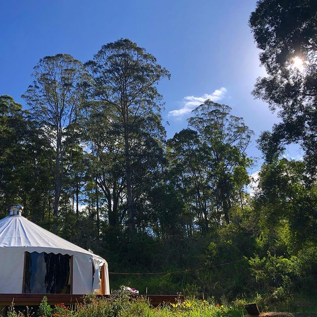 Two Teachers in Their 538 Sq. Ft. Yurt, Australia 6