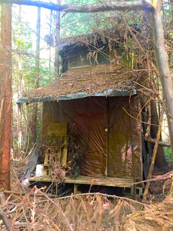 Tiny Cabin Discovered in Arcata Community Forest