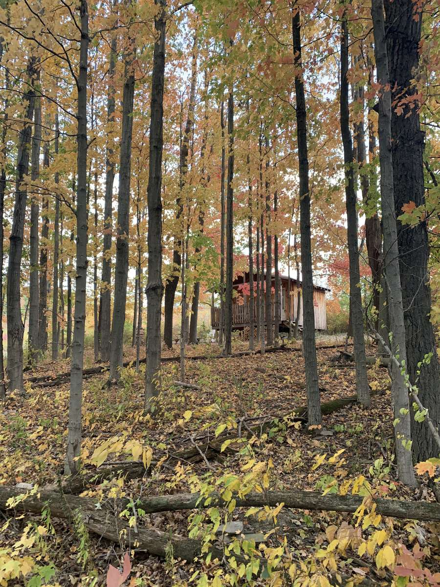 Off-Grid Homestead Cabin on 103 Acres 16