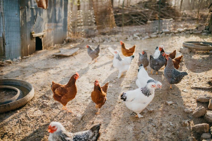 itzawayzback-farm-itzawayzback-farm-dogwood-cabin (9)