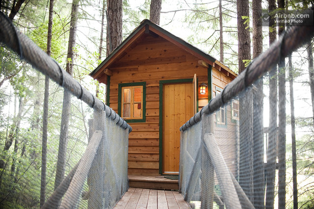 Treehouse Cabin Rental in Cave Junction, Oregon